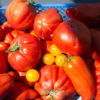 Tomates pour sauce tomate maison